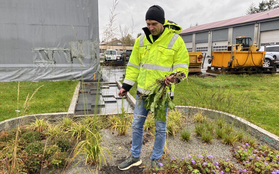 Har bygget vannrensende og flomforebyggende bed